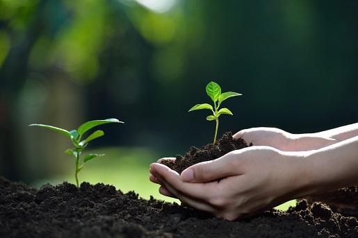 芽を出す植物